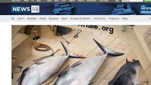 International Court of Justice rules against Japanese whaling
